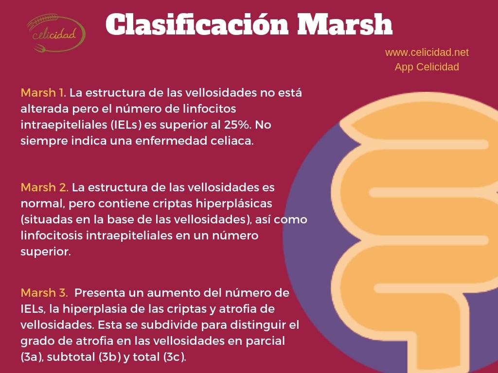 clasificación marsh celiacos