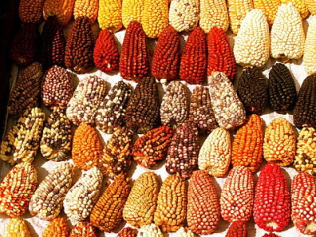 7 cereales sin gluten