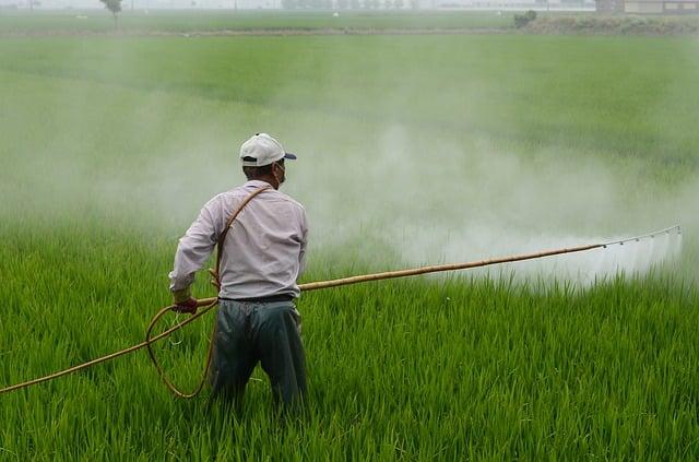 Un estudio vincula un componente de un herbicida con el desarrollo de la celiaquía
