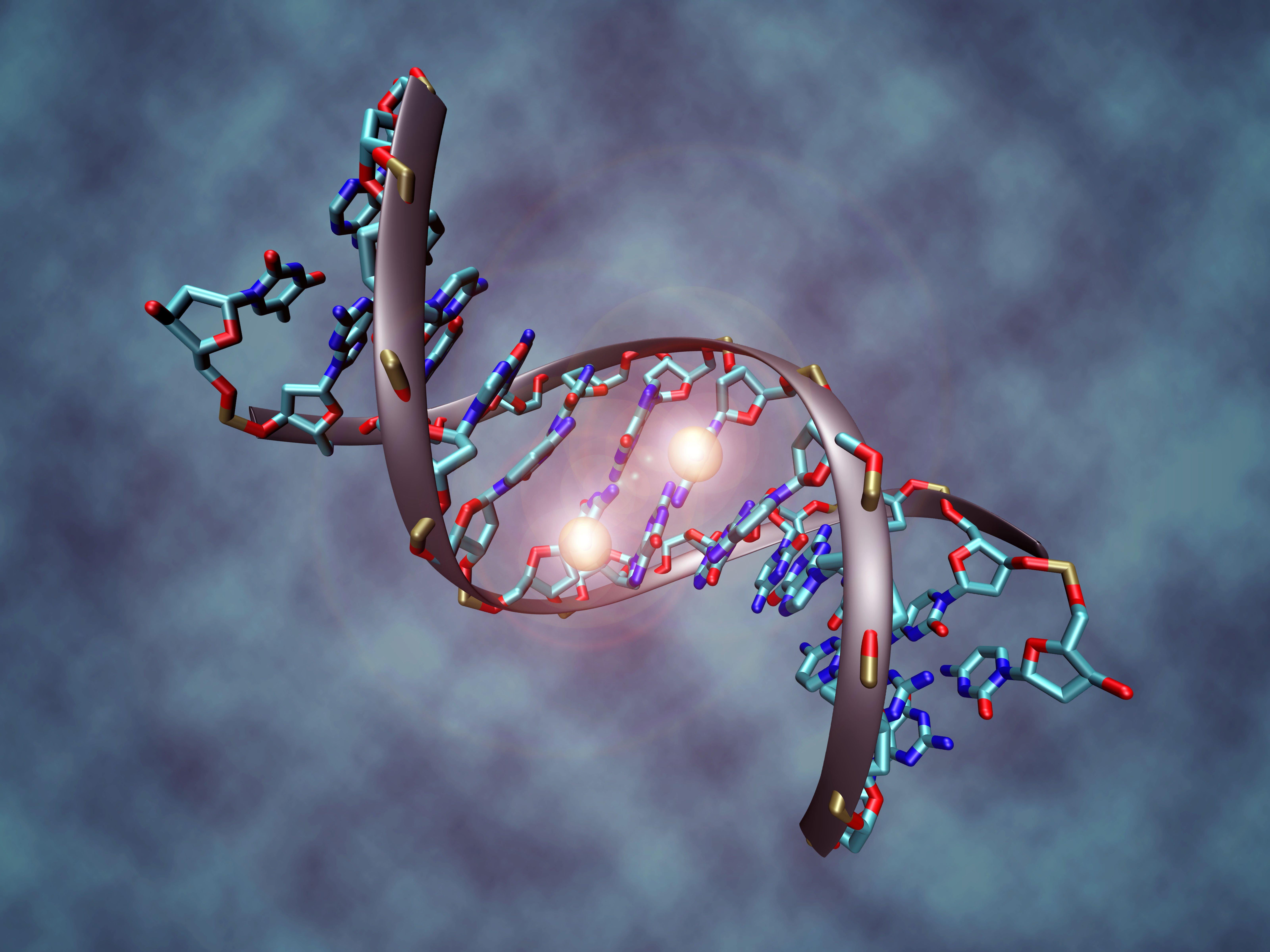 """Dra. Polanco: """"Los marcadores genéticos no sirven para diagnosticar la celiaquía, sólo para descartarla"""""""